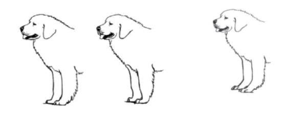correcte benen en voeten / te steile voorhand / zwakke polsen en voeten