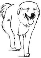 Silhoutte du chien en mouvement, vue du devant
