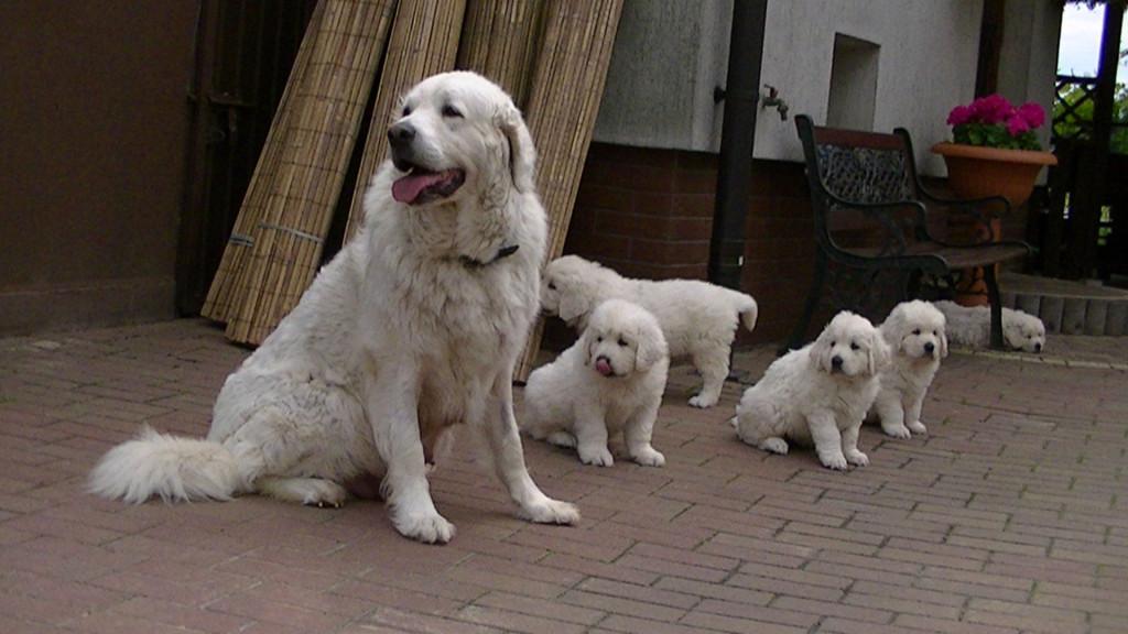 Puppies Proxima en Duch Gor